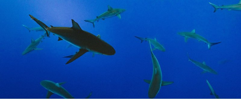 Learn From the Sharks in Multifamily Construction